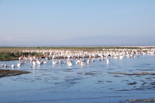 Africa Kenya Lake Nukuru