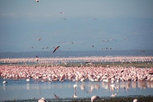 Lake Nukuru Africa Other Must Do's