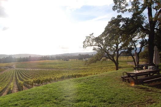 Scribe Winery With Cool Wines And An Even Cooler Vibe