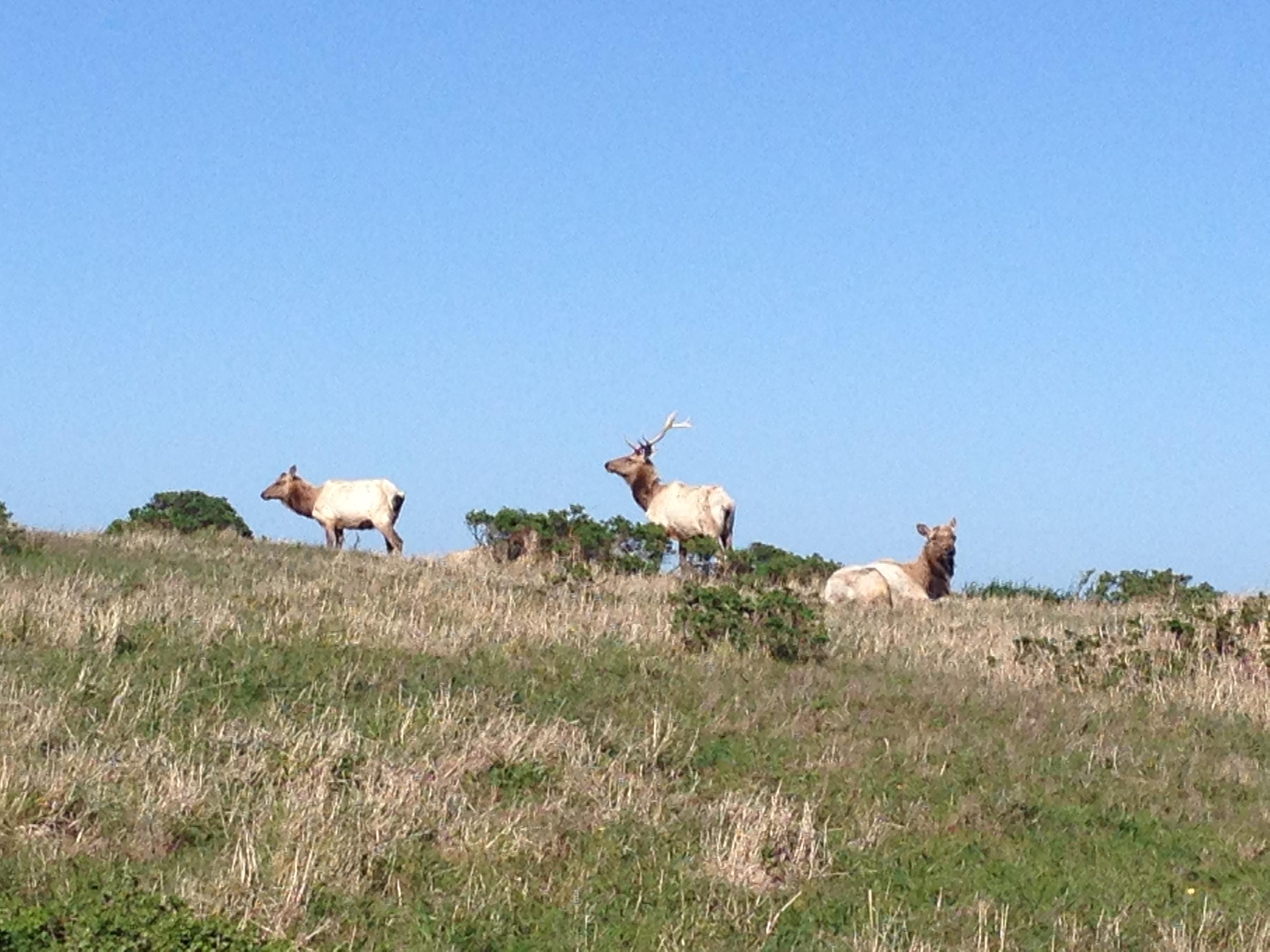 Tomales Bay Elk Hike