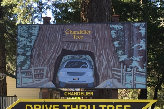 Chandelier Tree A Clark Griswold Must See In California's Redwoods Parks
