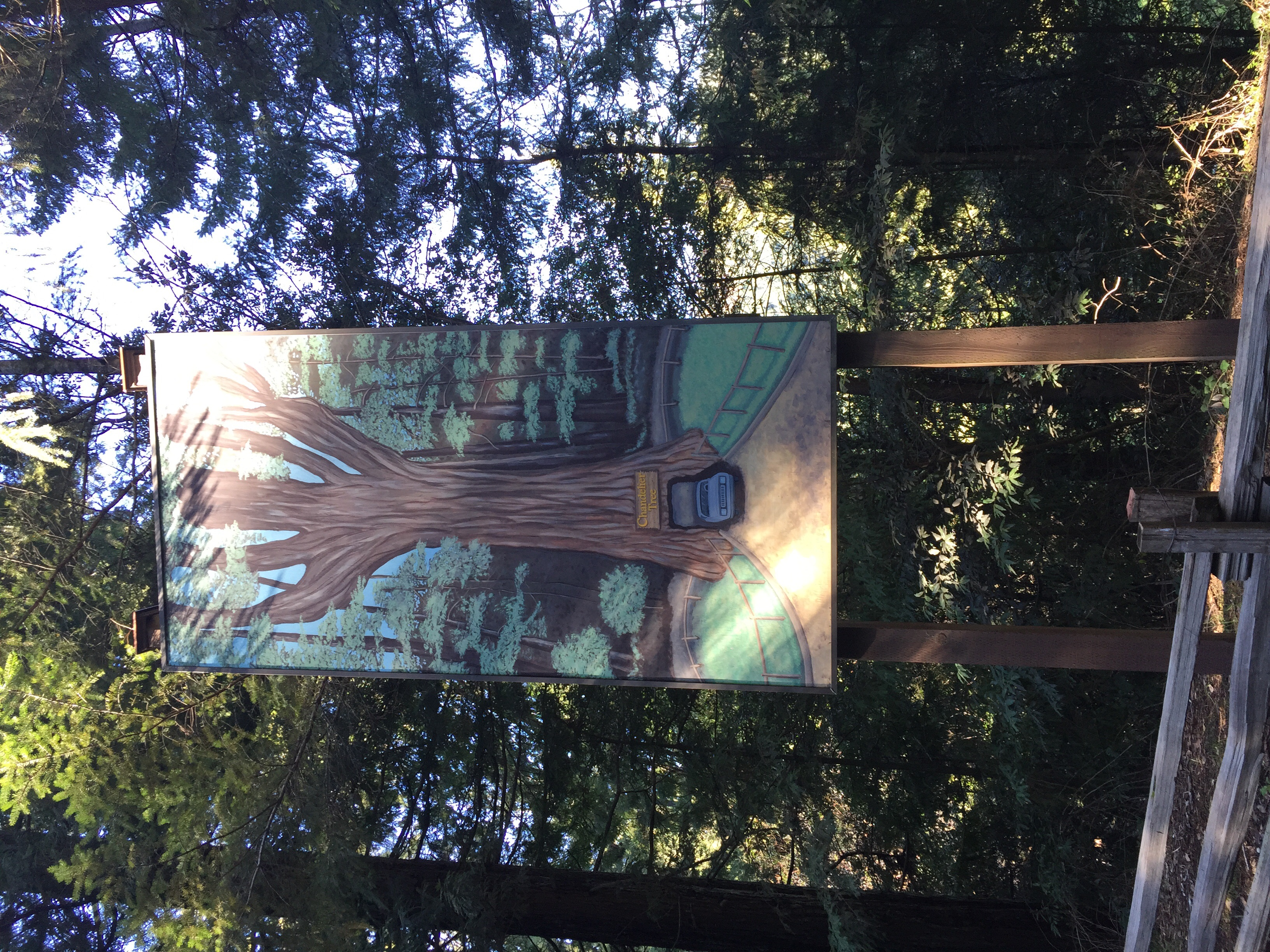 Chandelier tree a clark griswold must see in californias redwoods chandelier tree image arubaitofo Choice Image