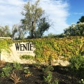 Wente Vineyard Concert Series