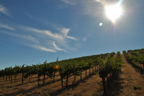 Paso Robles Wineroes