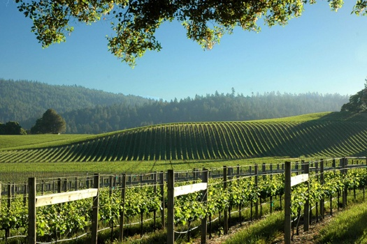 Anderson Valley's Goldeneye Winery & The Delicious Wine Tasting Experience