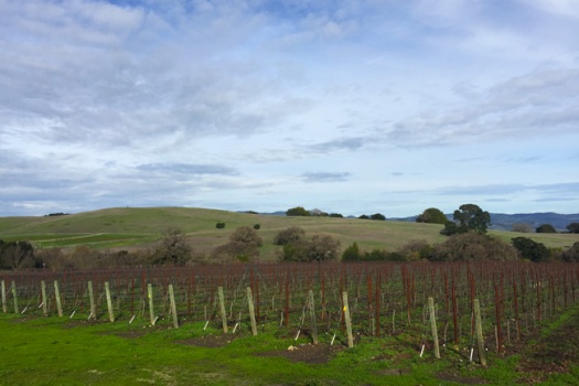 Dunstan Wines From The Fabulous Durell Vineyard