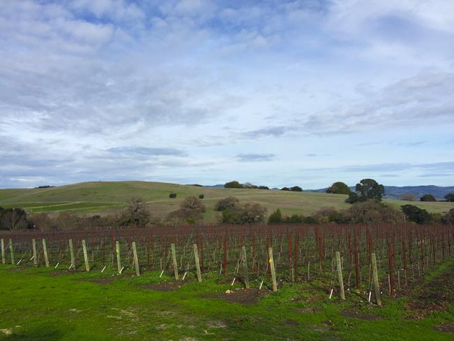 Durell Vineyards