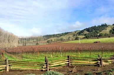 Anderson Valley's Top 10 Wineries & Eats