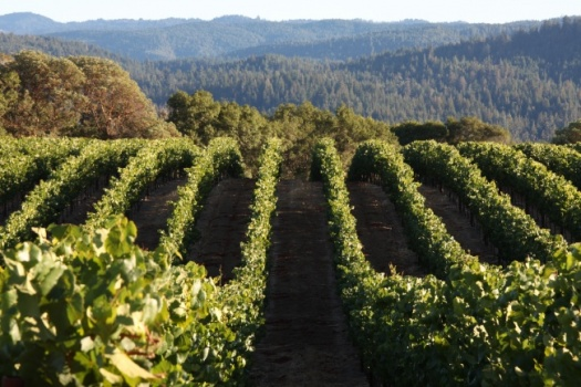 Anderson Valley's Incredible Roederer Estate Tour With Winemaker Arnaud Weyrich