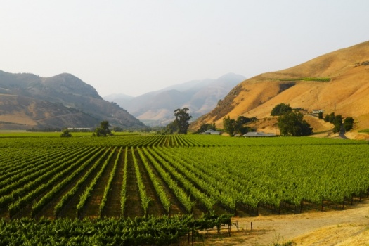 The Incredible Bien Nacido Vineyards One Of The Most Legendary Vineyards in Santa Barbara