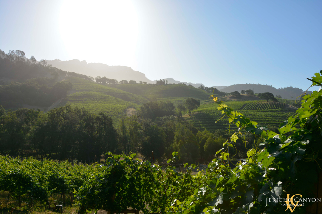 Jericho-Canyon-Vineyard-2
