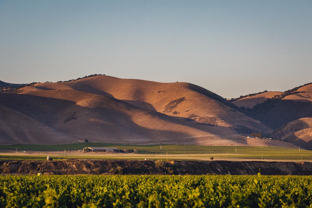 Byron Winery Santa Barbara County