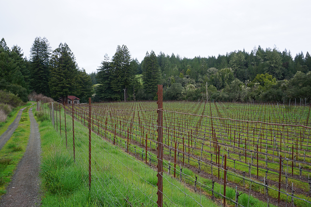Black Kite Cellars Anderson Valley